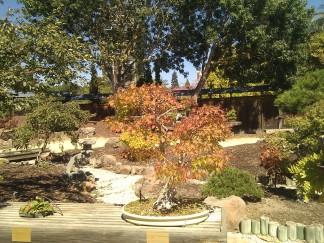 bonsai photo 2