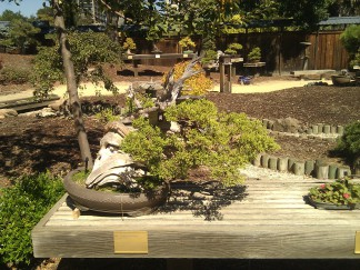 bonsai photo 3