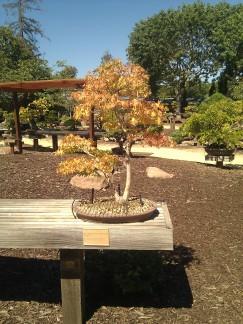 bonsai photo 9