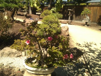 bonsai photo 6